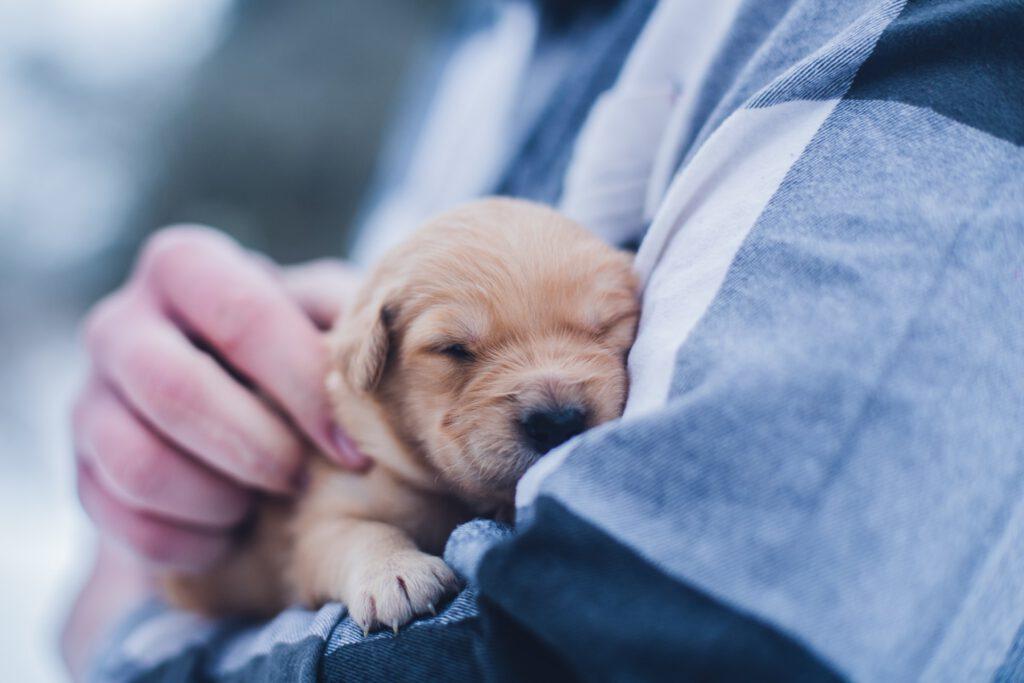 hond-vasthouden