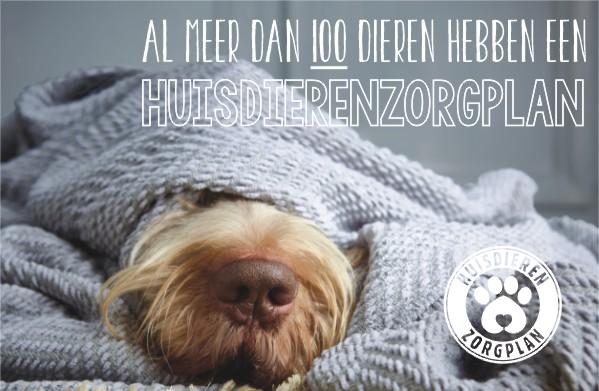 hzp-hond