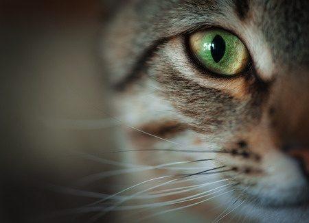 Kat half gezicht
